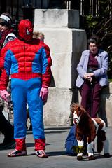 Spiderman's Horse