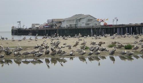 Santa Barbara Pier, California