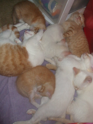 pile of kitties by you.