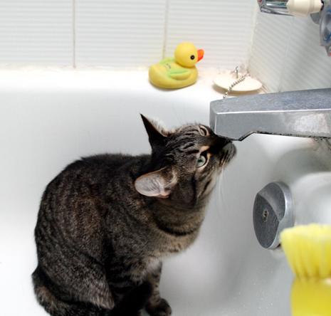 Fritz in the tub_0806.jpg