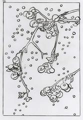 Bittersweet line drawing