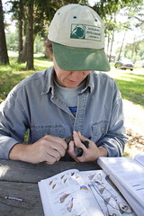 That's me - Banding the Gray Catbird