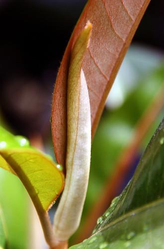 Textures of Magnolia
