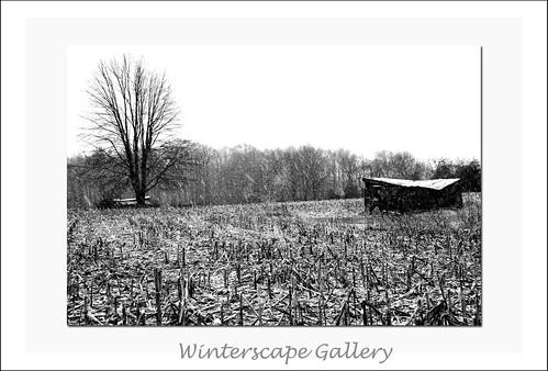 Wintergallery3