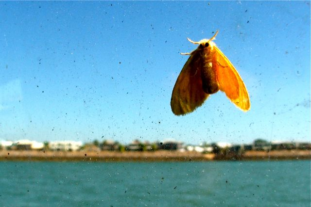 giant moth rises over Tipperary Waters
