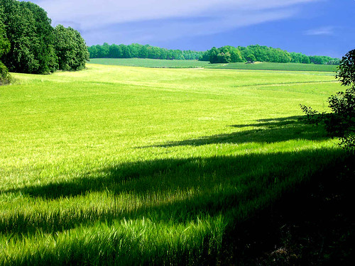 Landscape - Green View, Halla by Olaf S
