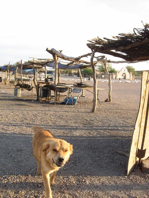 san xavier mission dog