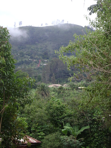 Far-away view of the mountain where the Ndi Wamba family lives. Look hard and youll see, in the middle of the mountain, a small strip of brown dirt. Thats the road that leads to their compound, which is the upper-most white dot to the right of the road.