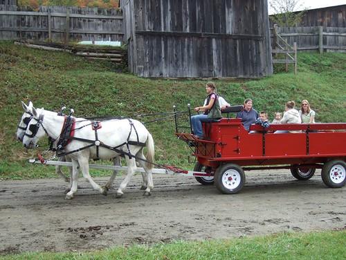 Percheron Mules Pulling a Wagon