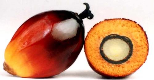 buah sawit