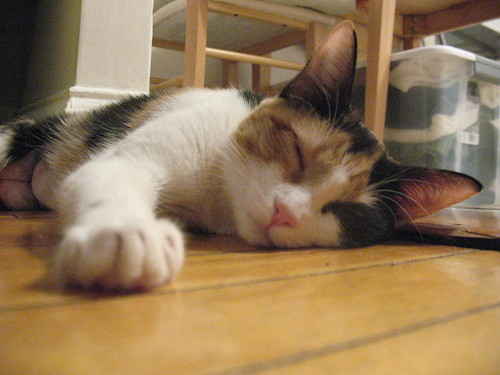 Ampersand resting