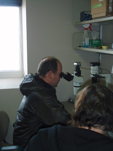 Prince Albert at the Microscope