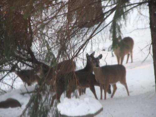 Deer up close!