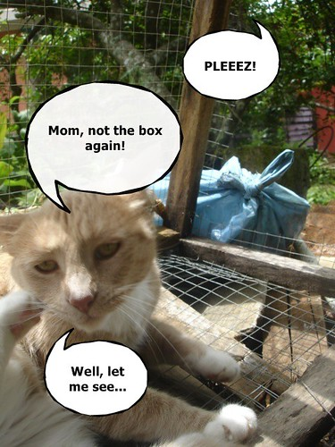 The box again?