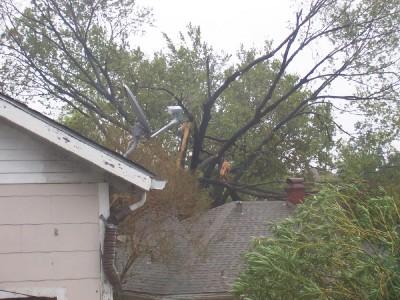 neighbors' tree