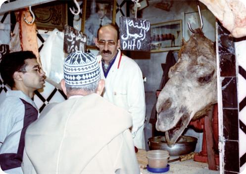 MA Meknes Camelhead
