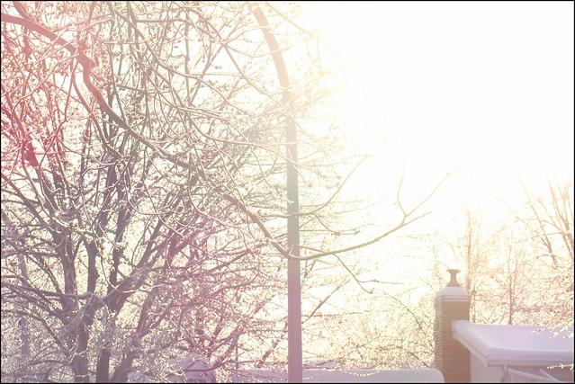 Lumière matinale