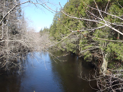 Batsto River, Wharton State Forest, New Jersey