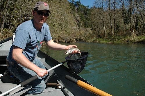 Middle Fork Trout