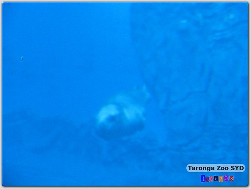 Taronga Zoo - Leopard Seal