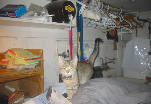 20071030 - Beavis in the laundry room - 141-4155