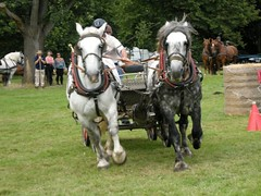 The Hatfield House Country Show