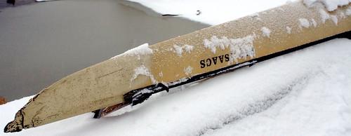 Snowy Scull
