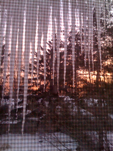 Morning Light Through Icicles