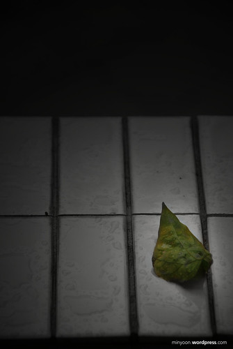 another angle of lonely leaf
