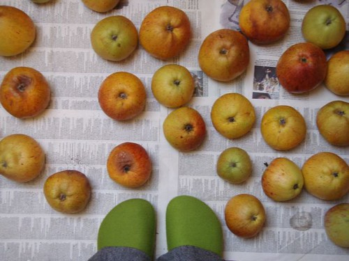 Stored apples and wool birkies