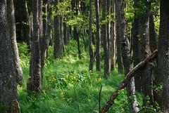 Ornö nature preserve