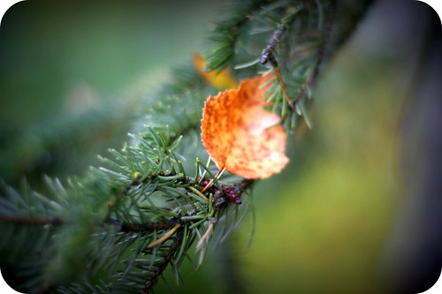 tiny remnants of fall (by Leaca's Philosophy)