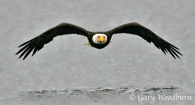 Lift Their Wings And Mount Up As Eagles, Eye-To-Eye Contact