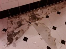 bathroom floor damage by the pup's
