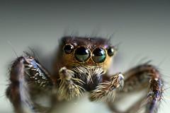 the internet spider