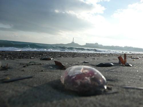 medusas en la playa de levante