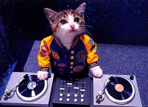 DJ CAT