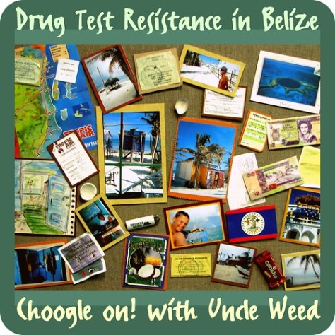 Drug Test Resistance in Belize - Choogle on #73