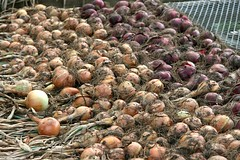 storage onions