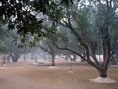 Amra Kunja by Paul Ancheta (Visva-Bharati University in Santiniketan. Bolpur, Birbhum, West Bengal, India)