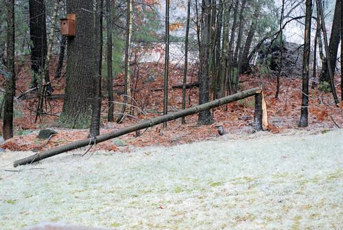 December ice storm 1