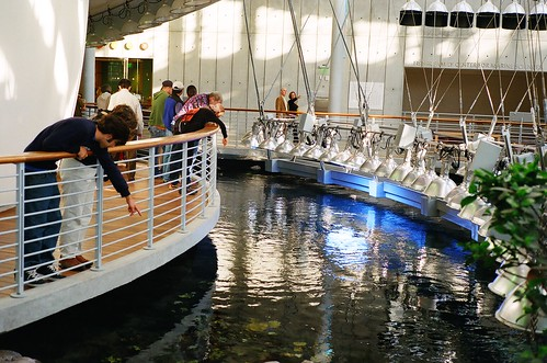 2015 Sharktoberfest Nightlife at California Academy of Sciences