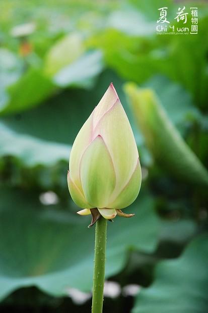 台北植物園06.jpg