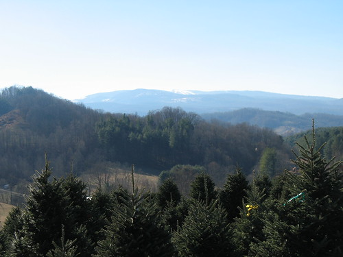 Beautiful view from the Christmas tree farm