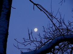 Wolf Moon, Minneapolis, Minnesota, January 2009, photo © 2009 by QuoinMonkey. All rights reserved.