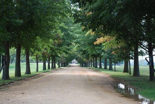 Drive way to Shirley Plantation