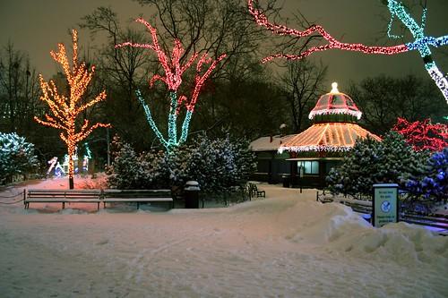 Winter Wonderland - Do Not Feed the Gulls
