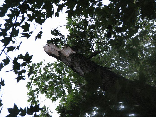 Lost branch