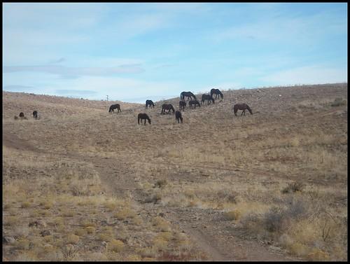 Wild Horses at Centennial Park