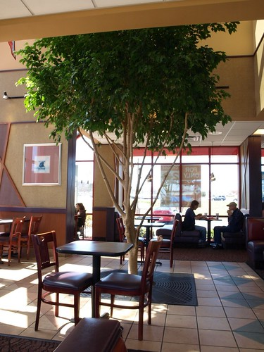 A tree grows in Arby's
